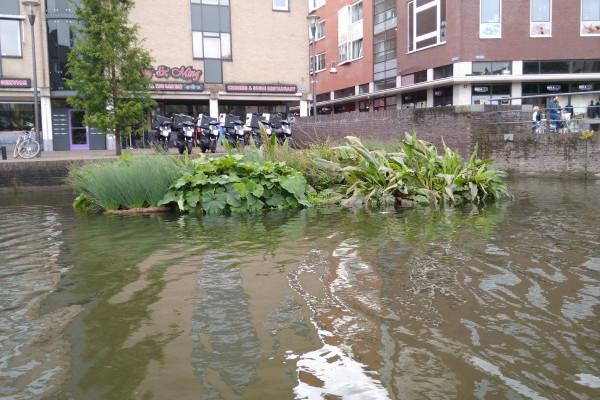 Dutch Water Tech maakt biobased waterplanteilanden op Green Chemistry Campus dankzij stimuleringsregeling